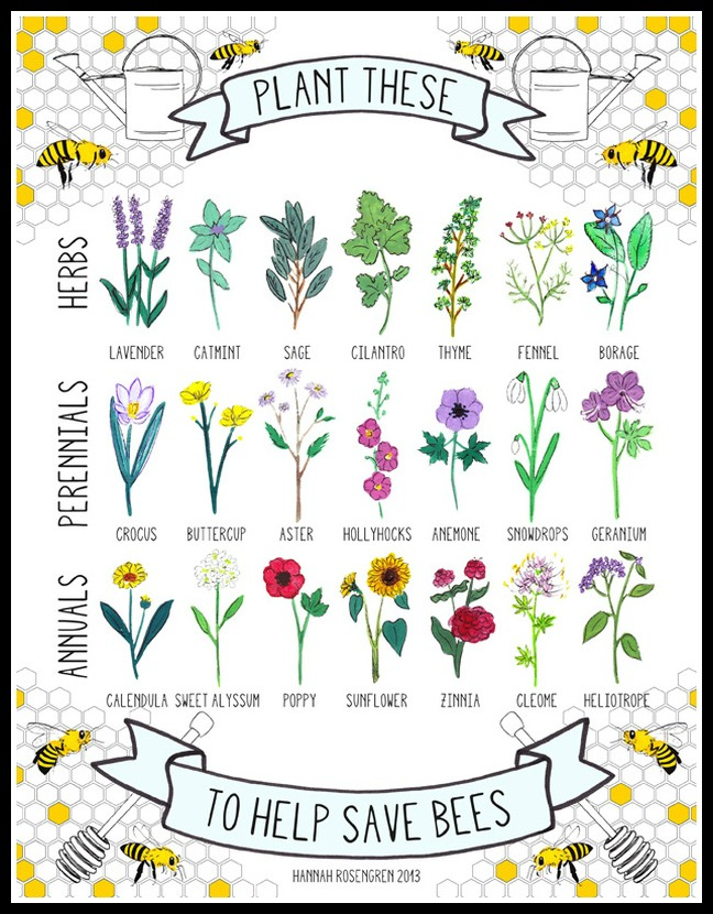 4 ways to create habitat for native bees serendipity gardens plant for bees chart by hannah rosengren mightylinksfo